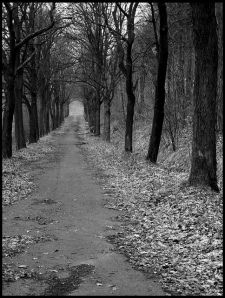 A time to reassess your path by Rantes