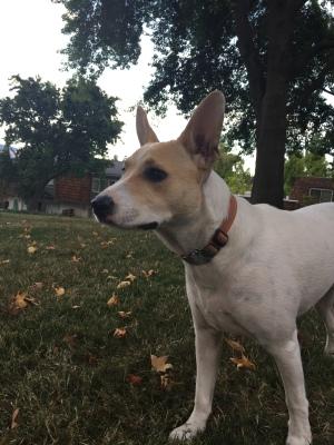 My puppy, my love. September 28th.